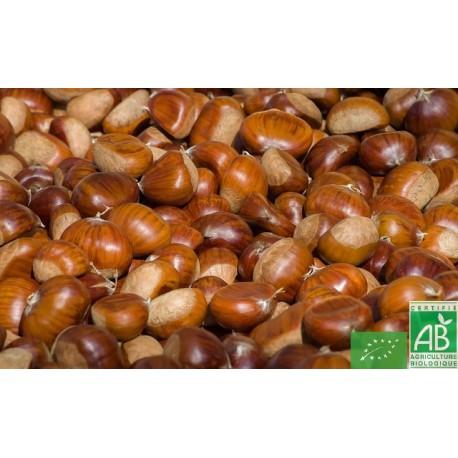 Pommes de terre Ditta filet de 5 Kg Touraine