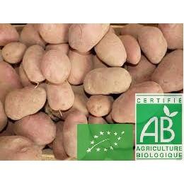 Pommes de terre tendre,1 Kg Touraine