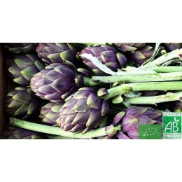 Artichaut violet, 1 pièce, France