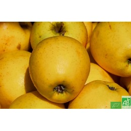 Pommes Golden 1 kg France