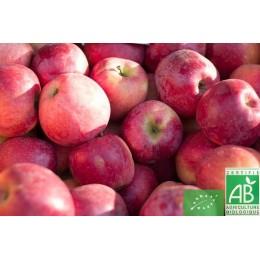 Pommes Reine des Reinettes (petit calibre), 1 kg, Touraine