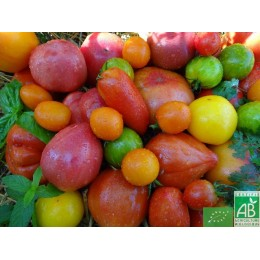 Tomates anciennes 500g France