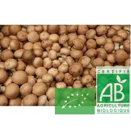 Champignons bruns, France, 250g