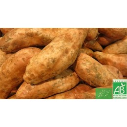 Patate douce 600g Espagne