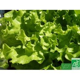 Salade , 1 pièce, Anjou