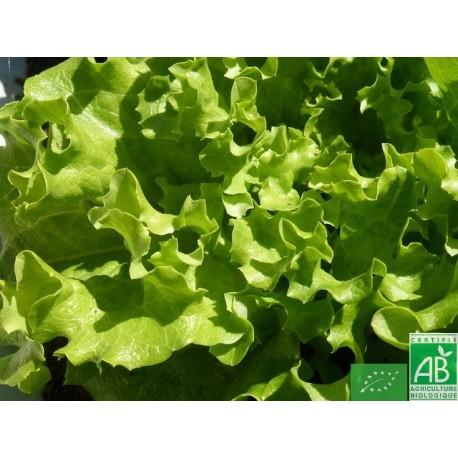 Salade/pièce