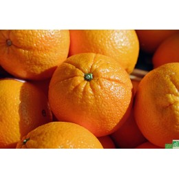Orange 1 Kg Italie
