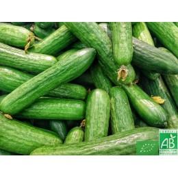 Concombre long, 1 pièce, Espagne