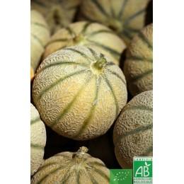 Melon ,1 pièce (environ 800g), France