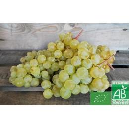 Raisin blanc Chasselas, France, 500g