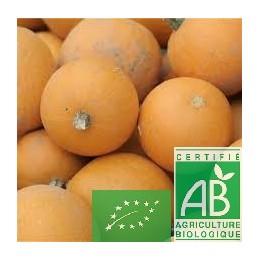 Courges pommes d or, 1 pièce (150g), Touraine