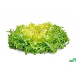 salade Frisée, 1 pièce, Anjou