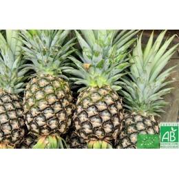 Ananas, 1 pièce, Costa Rica