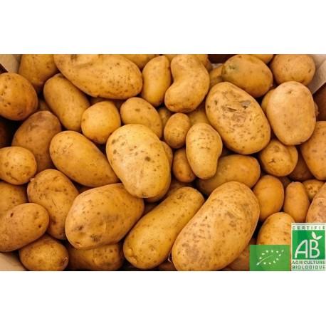 Pommes de terre Ditta filet de 2.5 Kg Touraine