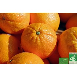 Orange maltaise, 1 Kg, Tunisie