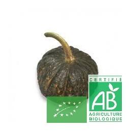 Courge shiatsu 1pièce (environ 1,5 Kg) Anjou