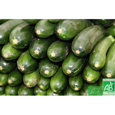 Courgettes italie