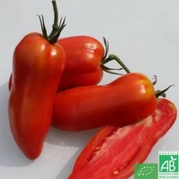 Tomates allongées Andine Cornue, 500g, France