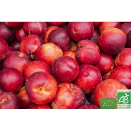 Nectarines blanches, France, 500g