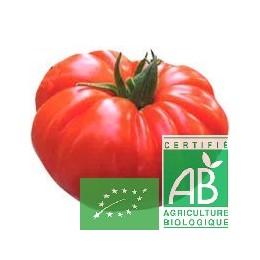 Tomates Marmande 1 Kg France