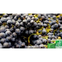 Colis promo Raisin noir Muscat, Indre, 3 Kg